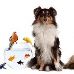 ¿Es legal prohibir mascotas en un piso de alquiler?